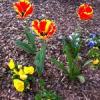 Thumbnail image for Spring into Action… You've Been Remade!
